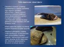 Риба вудильник. Цікаві факти Передній спинний плавець складається з шести про...