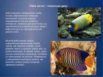 Риба–янгол – океанське диво Крім яскравого забарвлення, риби-янголи відрізняю...