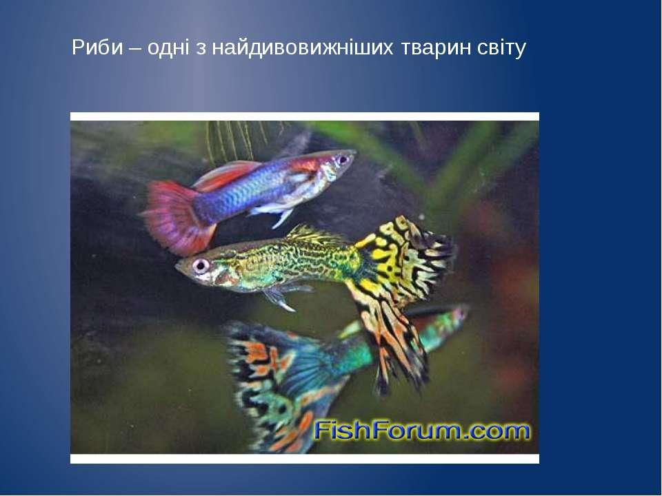 Риби – одні з найдивовижніших тварин світу