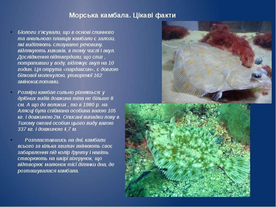 Морська камбала. Цікаві факти Біологи з'ясували, що в основі спинного та анал...