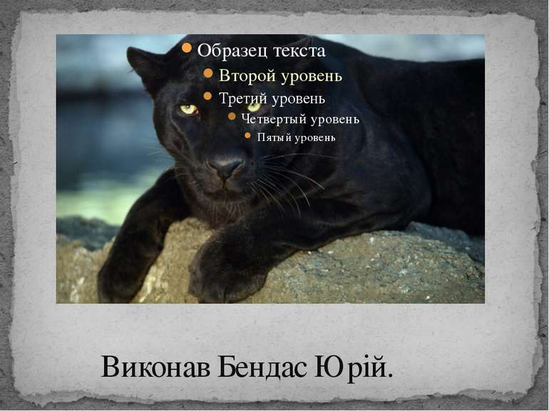 Виконав Бендас Юрій.