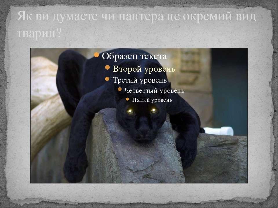 Як ви думаєте чи пантера це окремий вид тварин?