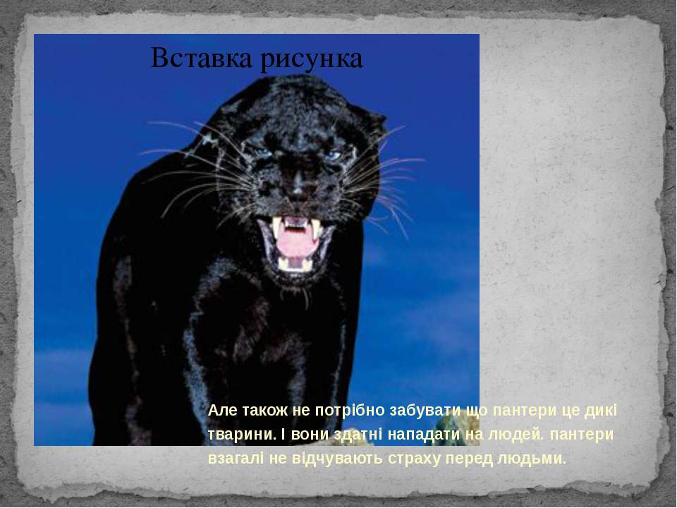 Але також не потрібно забувати що пантери це дикі тварини. І вони здатні напа...