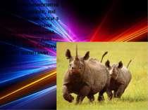 Ряд непарнокопитні об'єднує звірів, які мають високі ноги з обре розвиненим с...