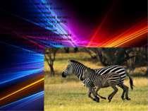 Спосіб життя різних видів непарнокопитних багато в чому залежить від середови...