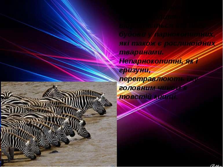 Будова травного тракту непарнокопитних сильно відрізняється від його будови у...