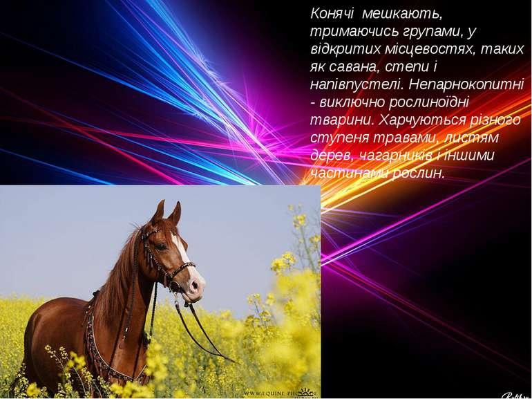 Конячі мешкають, тримаючись групами, у відкритих місцевостях, таких як савана...