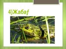 4)Жаба→