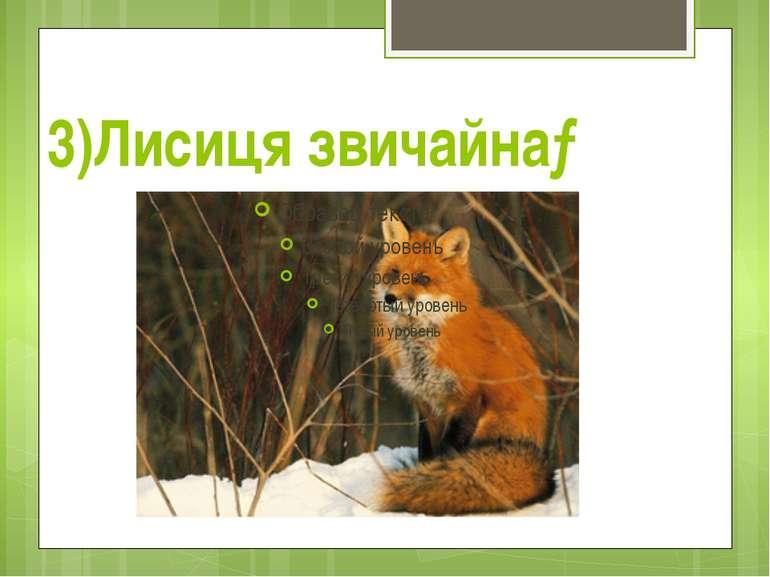 3)Лисиця звичайна→