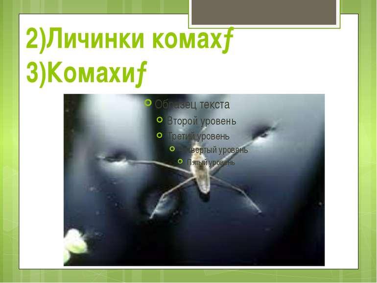 2)Личинки комах→ 3)Комахи→