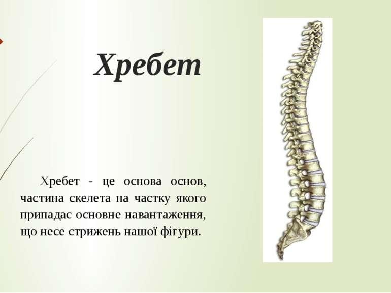 Хребет Хребет - це основа основ, частина скелета на частку якого припадає осн...