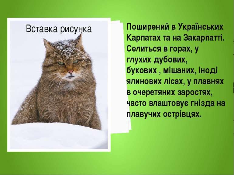 Поширений в Українських Карпатах та на Закарпатті. Селиться в горах, у глухих...