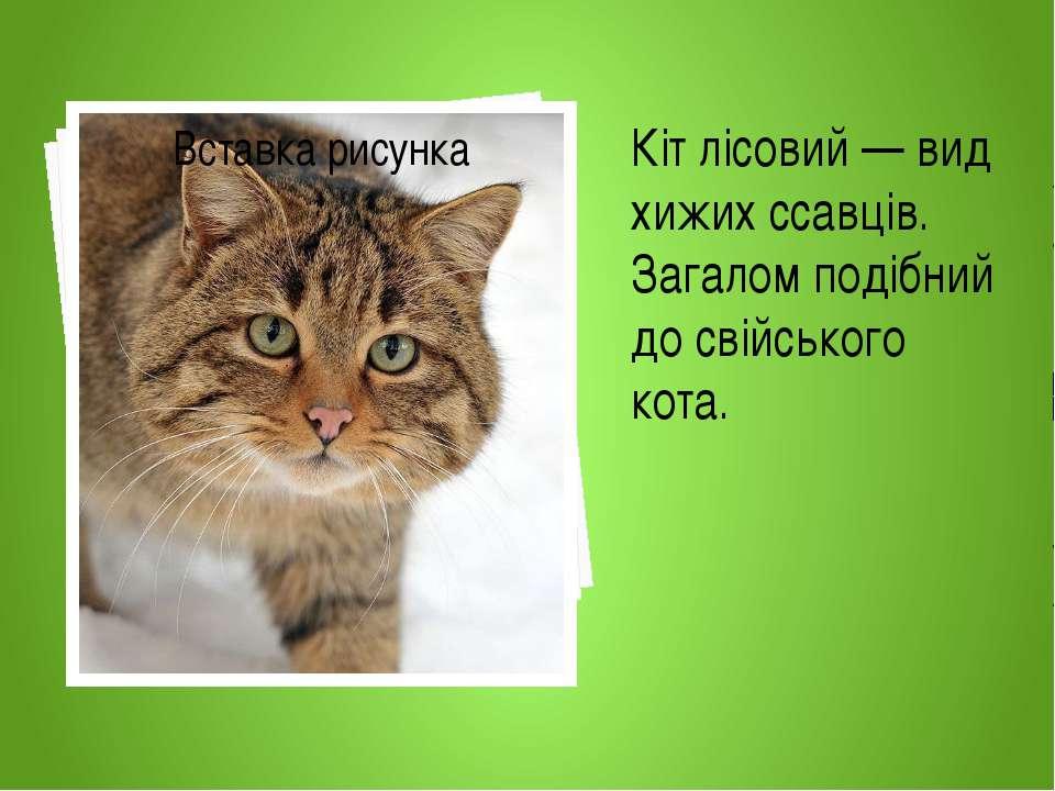 Кіт лісовий — вид хижих ссавців. Загалом подібний до свійського кота.