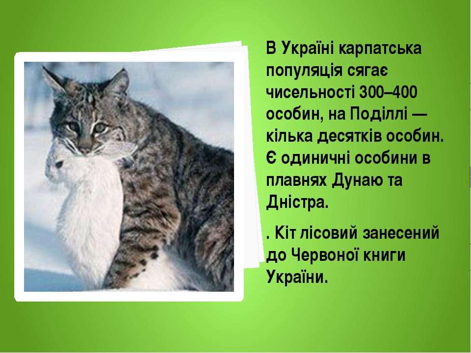 В Україні карпатська популяція сягає чисельності 300–400 особин, на Поділлі —...