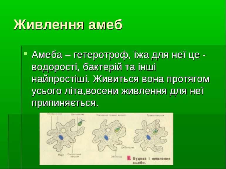 Живлення амеб Амеба – гетеротроф, їжа для неї це - водорості, бактерій та інш...