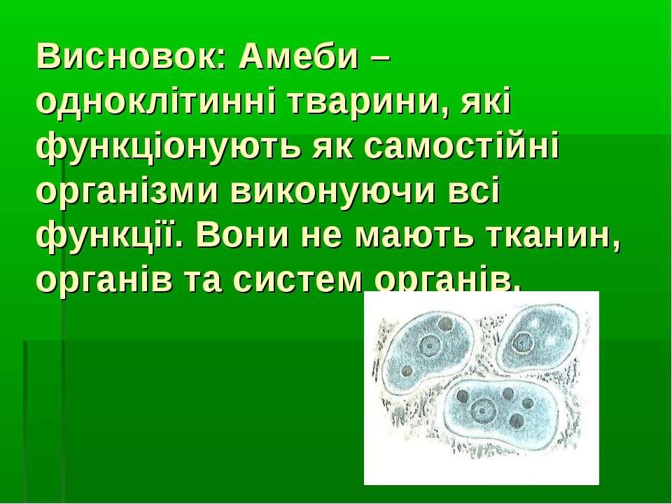 Висновок: Амеби – одноклітинні тварини, які функціонують як самостійні органі...