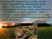 Тіло плазунів поділяють на голову, тулуб і хвіст. На відміну від земноводних,...