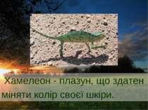 Хамелеон - плазун, що здатен міняти колір своєї шкіри.