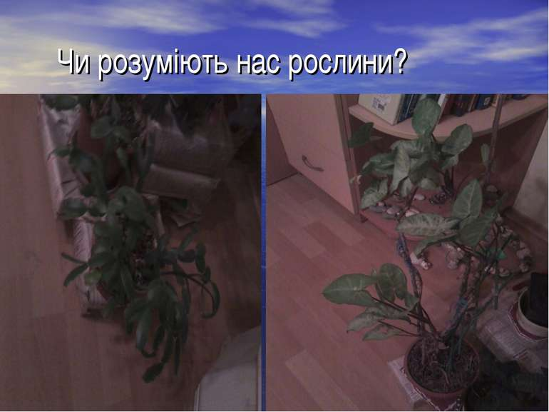 Чи розуміють нас рослини?
