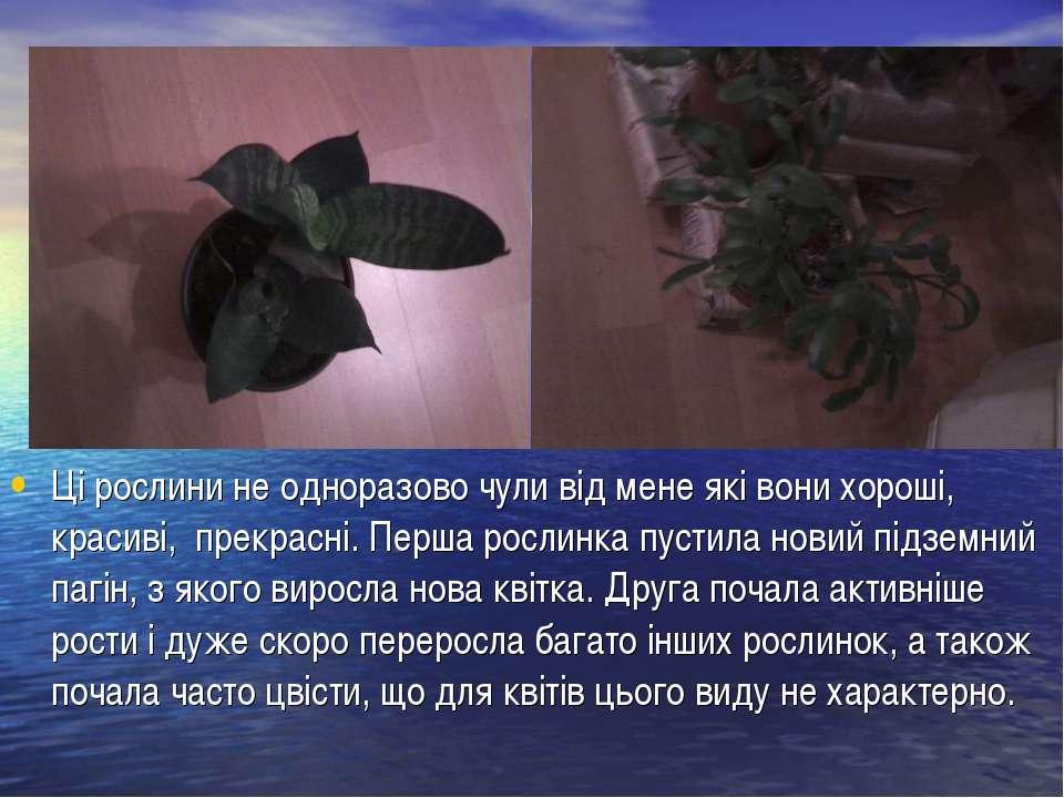 Ці рослини не одноразово чули від мене які вони хороші, красиві, прекрасні. П...