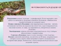 Парування:дощові черв'яки - гермафродити. Вони знаходять одне одного за запа...