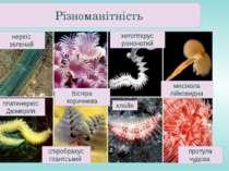 хетоптерус різноногий міксікола лійковидна платинереїс Дюмеріля спіробрахус г...
