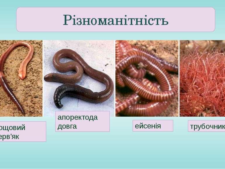 Різноманітність дощовий черв'як апоректода довга ейсенія трубочник