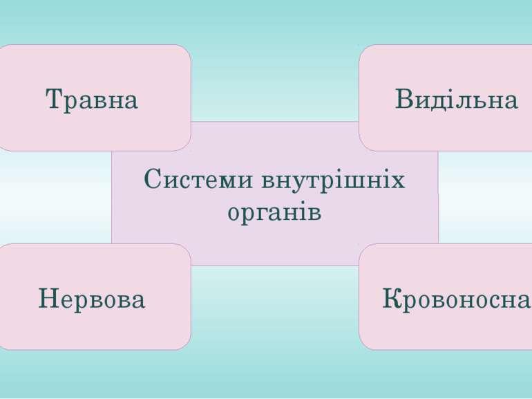 Системи внутрішніх органів Травна Видільна Нервова Кровоносна