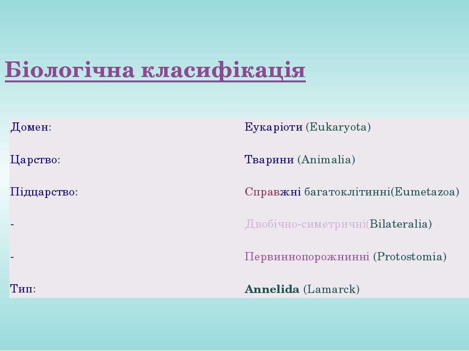 Біологічна класифікація Домен: Еукаріоти(Eukaryota) Царство: Тварини(Animal...