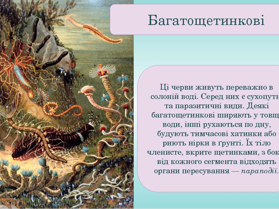 Ці черви живуть переважно в солоній воді. Серед них є сухопутні та паразитичн...