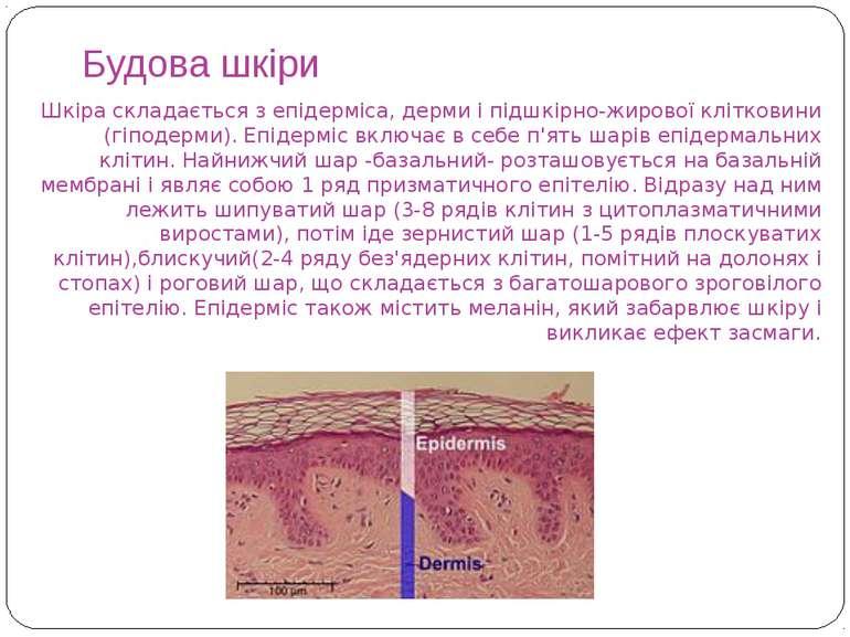 Будова шкіри Шкіра складається з епідерміса, дерми і підшкірно-жирової клітко...