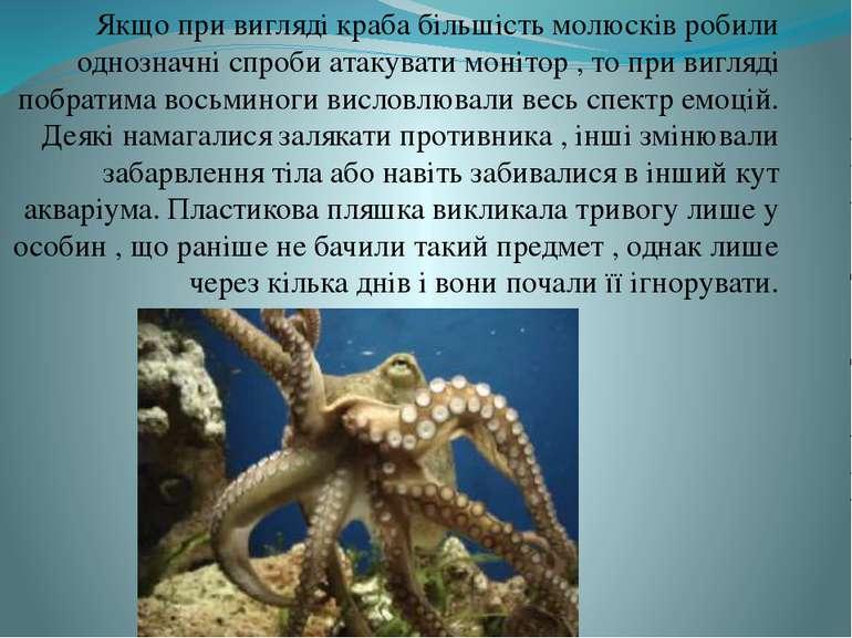 Якщо при вигляді краба більшість молюсків робили однозначні спроби атакувати ...