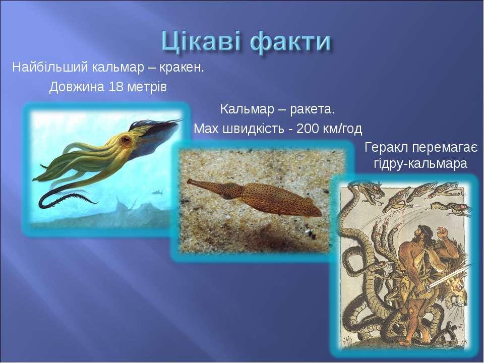 Найбільший кальмар – кракен. Довжина 18 метрів Кальмар – ракета. Мах швидкіст...