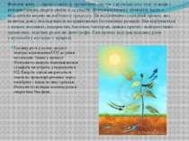 Головну роль у цьому процесі відіграє відновлення СО2 до рівня вуглеводів. Од...