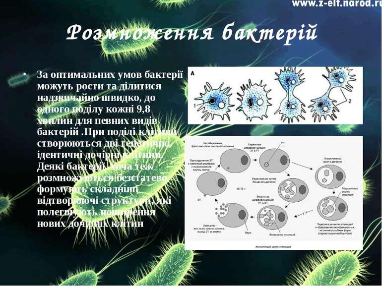 Розмноження бактерій За оптимальних умов бактерії можуть рости та ділитися на...
