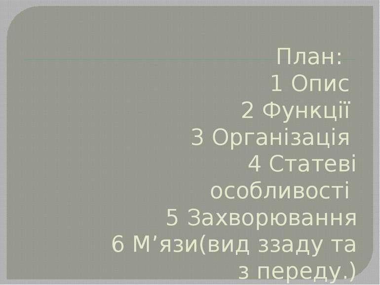 План: 1 Опис 2 Функції 3 Організація 4 Статеві особливості 5 Захворювання 6 М...