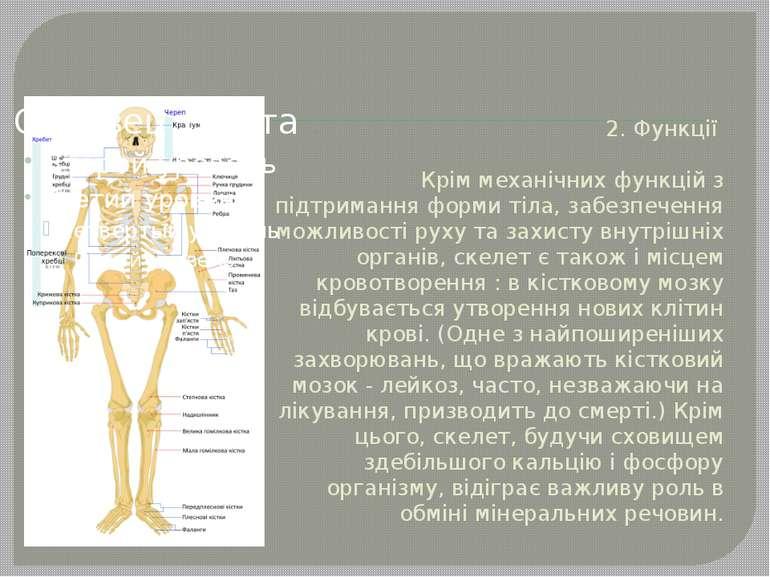 2. Функції Крім механічних функцій з підтримання форми тіла, забезпечення мож...