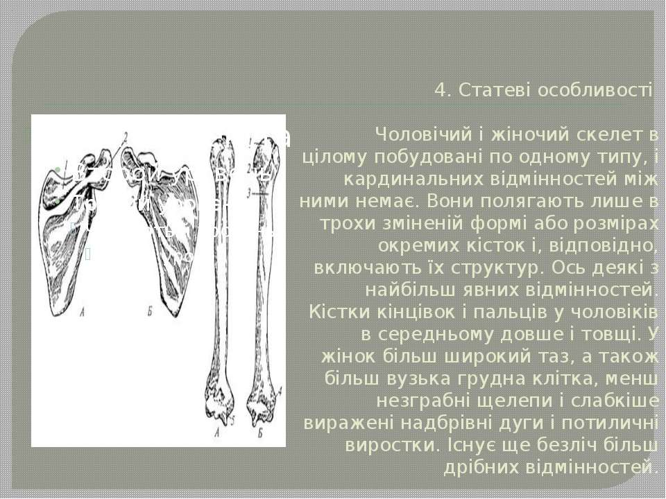 4. Статеві особливості Чоловічий і жіночий скелет в цілому побудовані по одно...