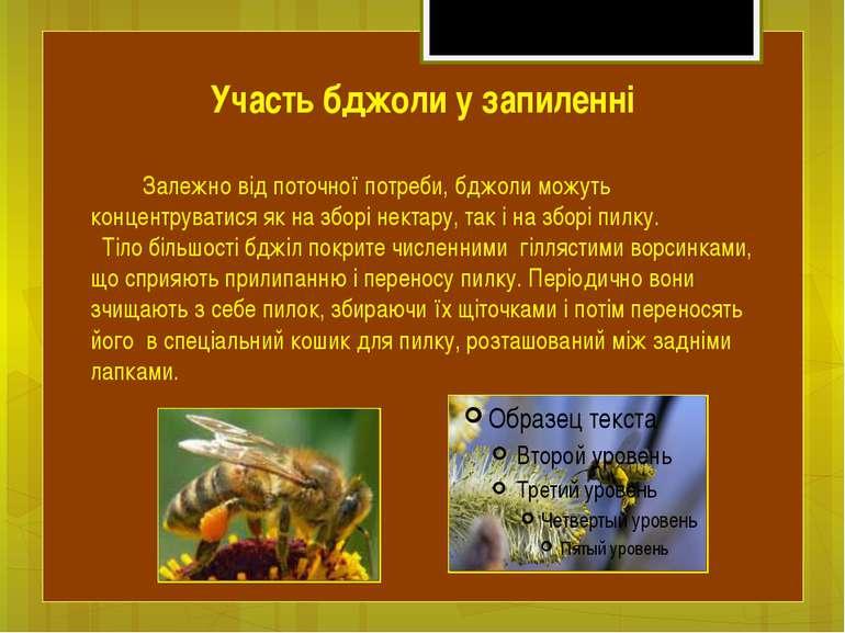 Залежно від поточної потреби, бджоли можуть концентруватися як на зборі некта...