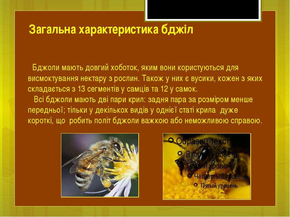 Бджоли мають довгий хоботок, яким вони користуються для висмоктування нектару...