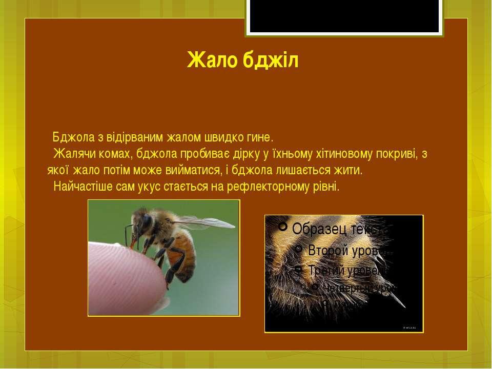 Бджола з відірваним жалом швидко гине. Жалячи комах, бджола пробиває дірку у ...