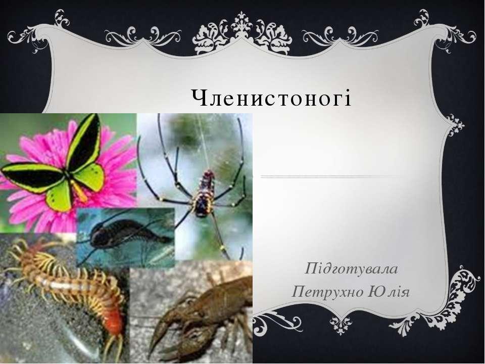 Членистоногі Підготувала Петрухно Юлія