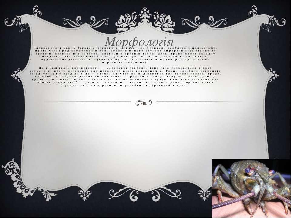 Членистоногі мають багато спільного з кільчастими червами, особливо з поліхет...
