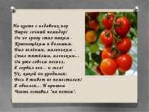 На кусте с недавних пор Вырос сочный помидор! Он не сразу стал таким - Красно...