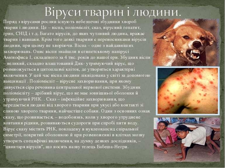 Поряд з вірусами рослин існують небезпечні збудники хвороб тварин і людини. Ц...