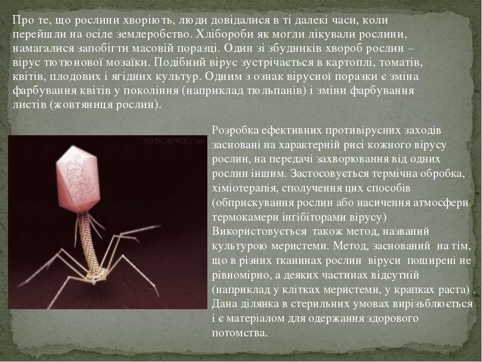 Про те, що рослини хворіють, люди довідалися в ті далекі часи, коли перейшли ...