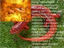 """Назва """"саламандра"""", в перекладі з арабської і перської мов, означає """"живе у о..."""