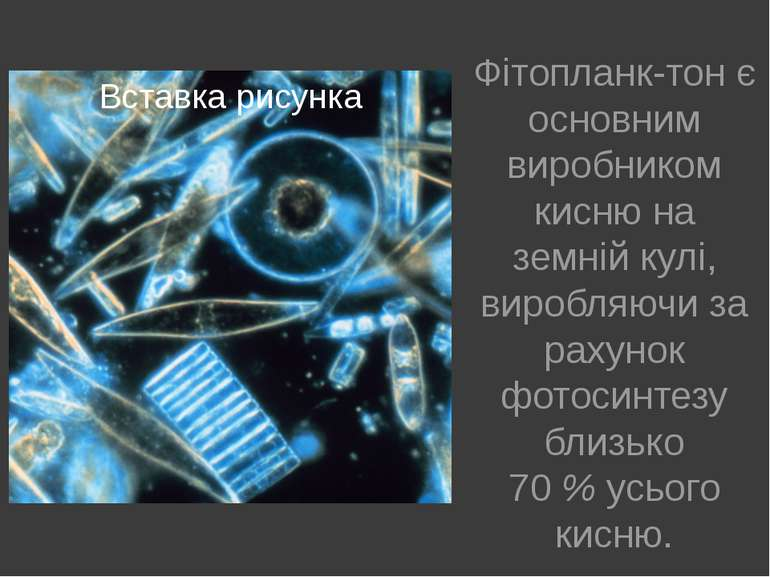 Фітопланк тон є основним виробником кисню на земній кулі, виробляючи за рахун...