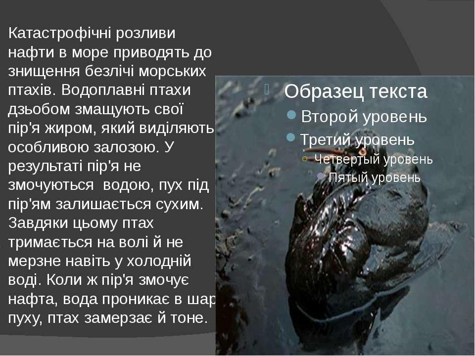 Катастрофічні розливи нафти в море приводять до знищення безлічі морських пта...