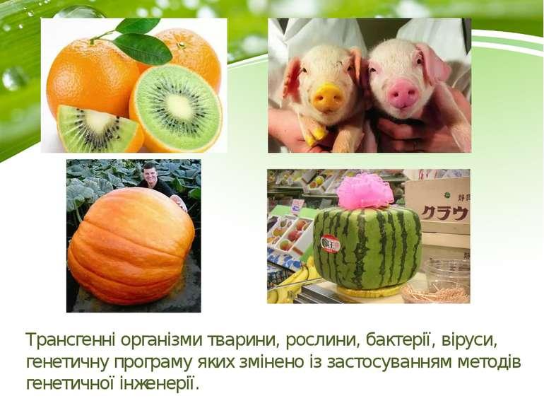 Трансгенні організми тварини, рослини, бактерії, віруси, генетичну програму я...